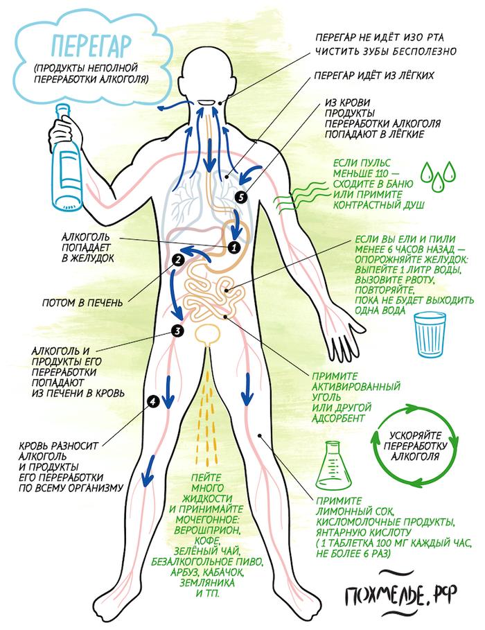 Правильная инфографика к утру понедельника Алкоголь, Перегар, Похмелье