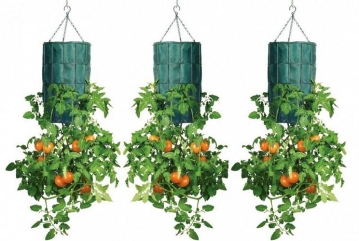 Необычный способ выращивания помидоров прямо на балконе
