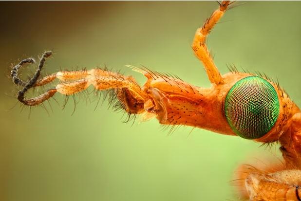 Впечатляющие макроснимки насекомых