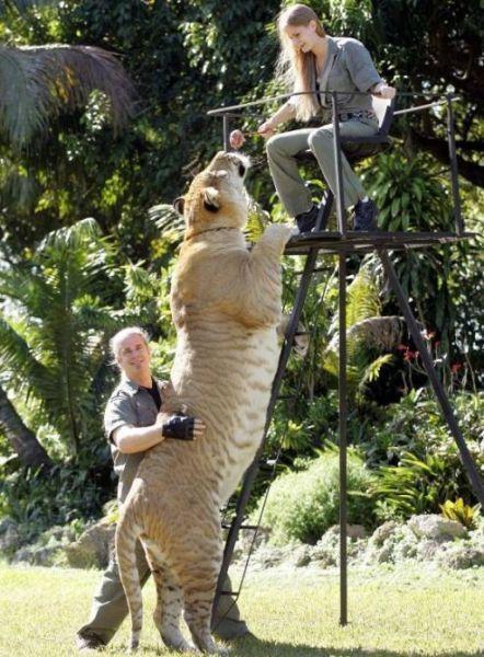 Самый большие животные