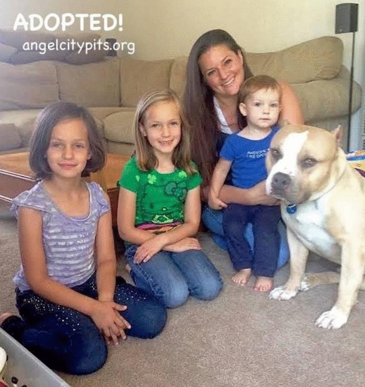 Питбуль Оззи был взят из приюта семьей состоящей из одной кошки, двух взрослых и троих детей...