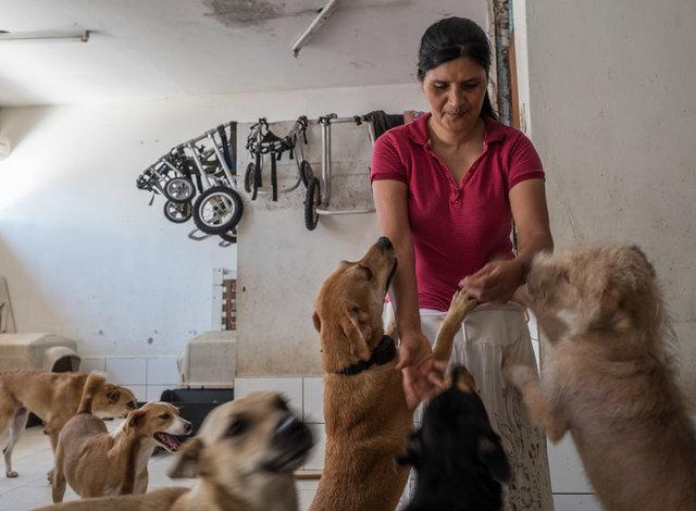 Женщина превратила свой дом в приют для парализованных собак