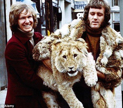 Когда-то они воспитали льва и выпустили его на волю. А много лет спустя поехали в гости