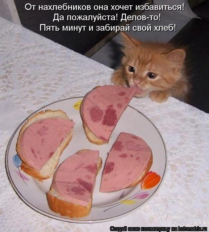 Котоматрица: От нахлебников она хочет избавиться! Да пожалуйста! Делов-то! Пять минут и забирай свой хлеб!