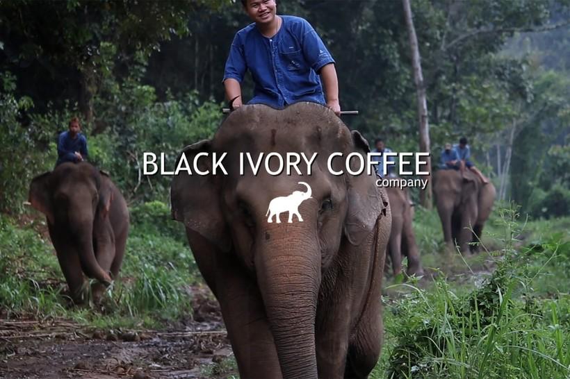 Самые дорогие сорта кофе в м…