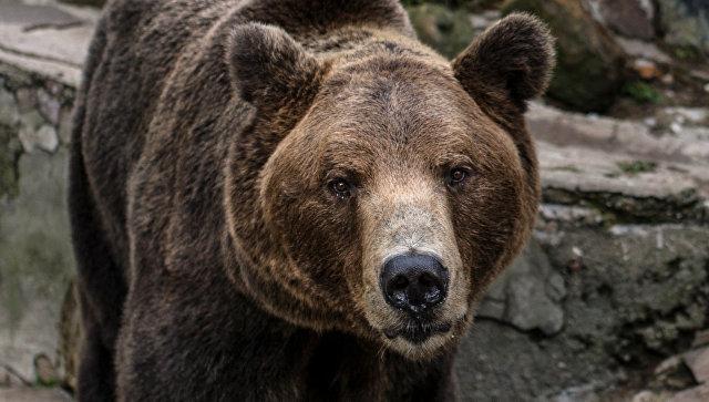 Медведи вышли из спячки