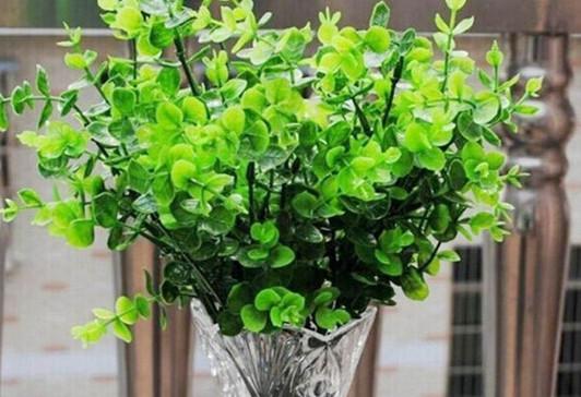 8 лекарственных растений, ко…