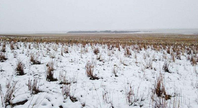На этой фотографии 550 овец, можете их найти?
