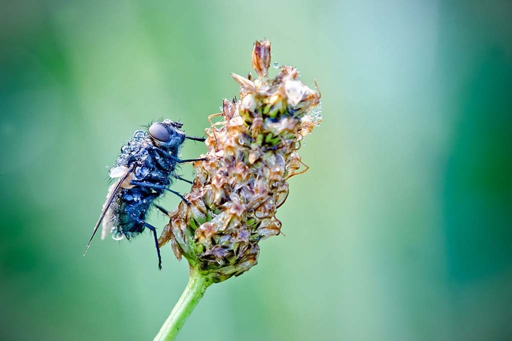 David Chambon 4 «Драгоценные» насекомые Давида Шамбона