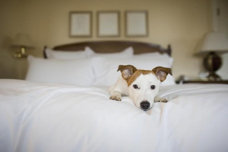 Мужчина хотел поселиться в отеле с собакой и получил достойный ответ от администрации