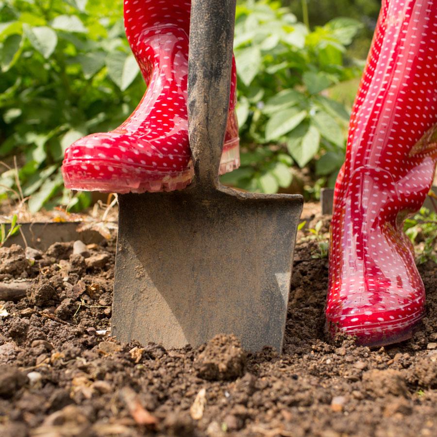 Как избавиться от сорняков: раундап и другие средства