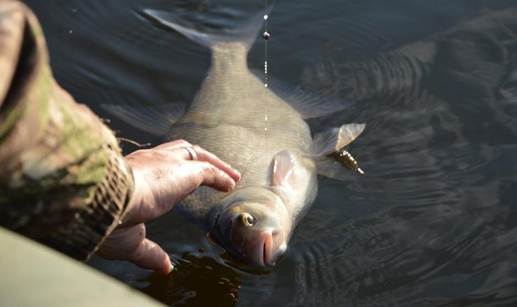 все о рыбалке на леща летом видео