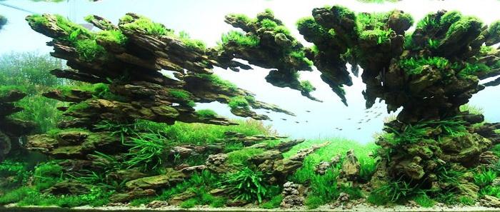 Лучшие примеры подводного ландшафтного дизайна «Aquascaping»