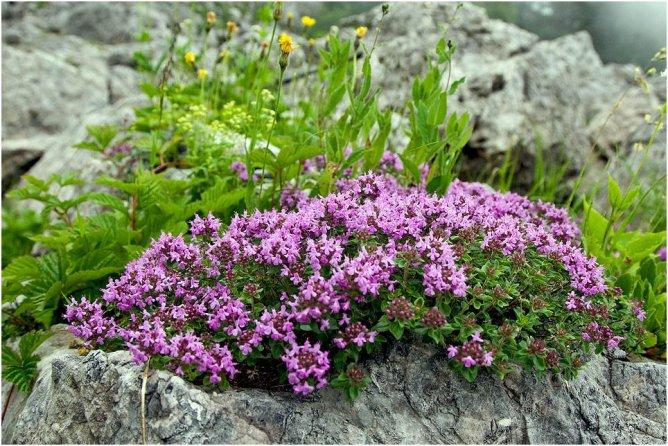 объявления ползучие растения горного крыма могила возникла