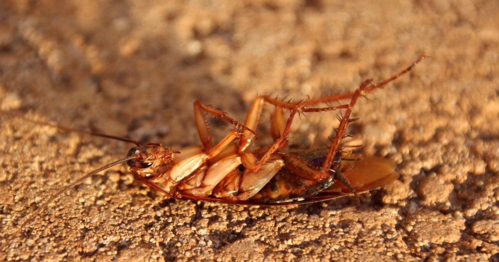 Хотели потравить тараканов, а потравили соседей