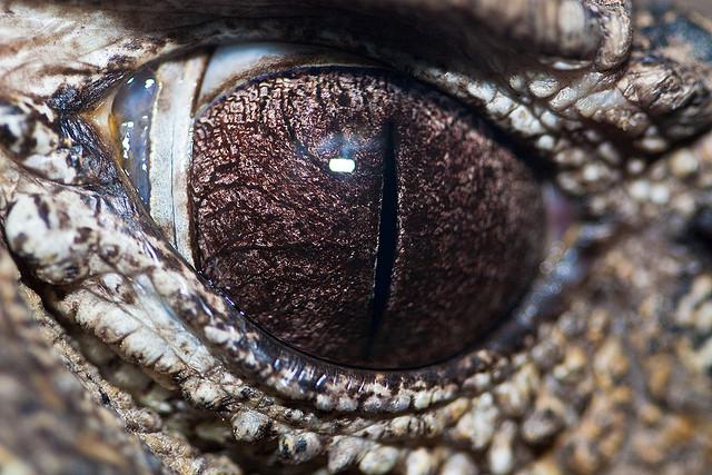 20 невероятных снимков глаз