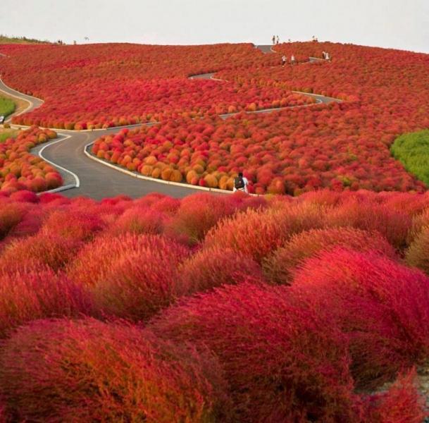 4 самых красивых места на Земле в весенний период