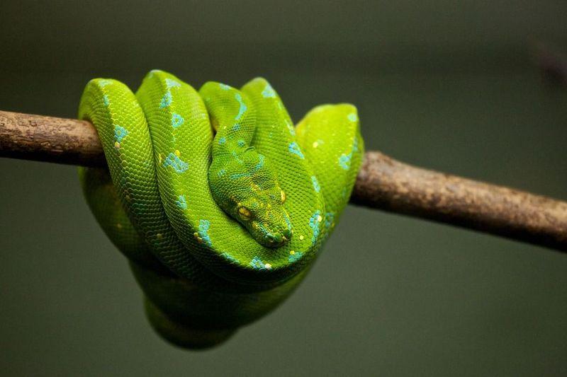 Ученые объяснили, как змеи в процессе эволюции потеряли конечности