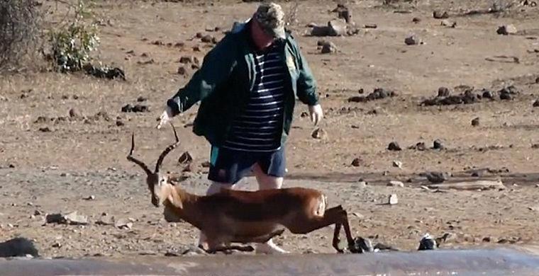 Турист спас импалу