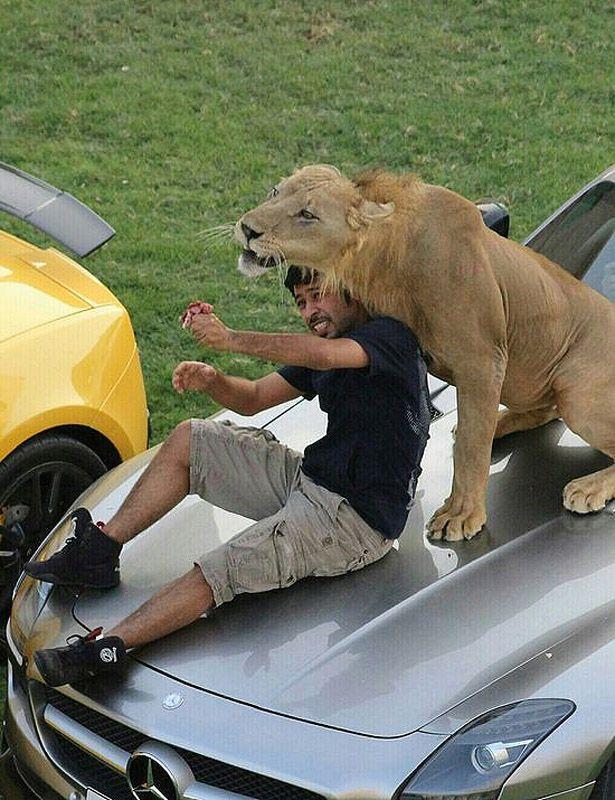 catsncars37 Хищные кошечки и дорогие машины: досуг арабского миллионера