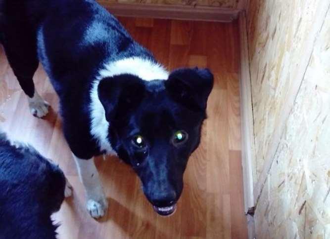 В Челябинске спасли собаку, которая полгода жила под киоском и не могла выбраться