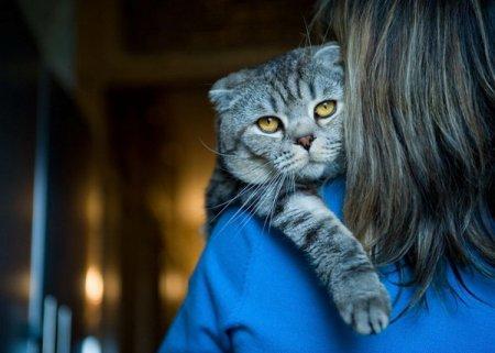 16 доказательств того, что кошки тоже умеют любить