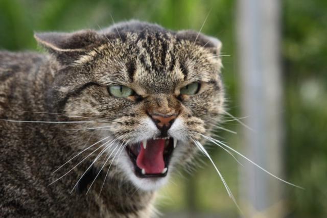 коты, улица, животные, выживание, город, девушки, сиськи