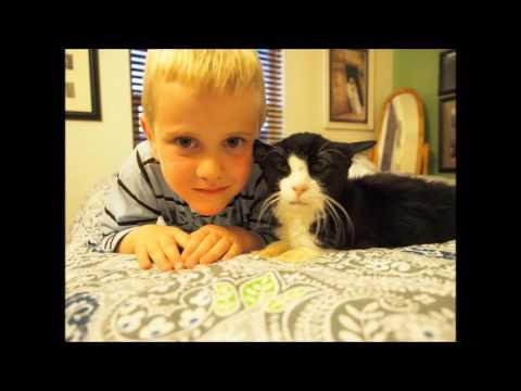 Семья приютила 20-летнего кота. Они и подумать не могли, что в нем столько любви!