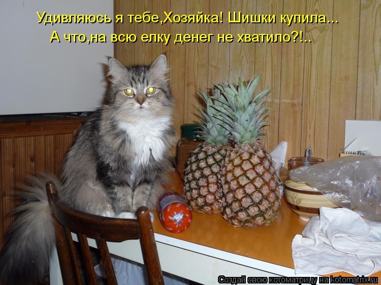 Котоматрица: Удивляюсь я тебе,Хозяйка! Шишки купила... А что,на всю елку денег не хватило?!..