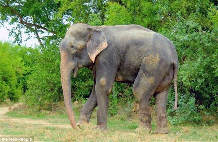 Radga09 Спасение слона, проведшего 50 лет в неволе, который плакал от счастья