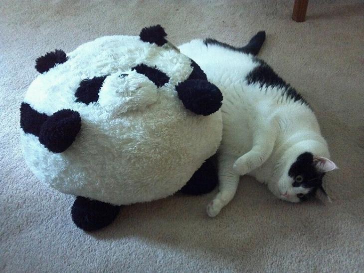Мимимишные коты толстячки