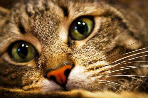 Живет у нас уже лет десять кошка Машка. Как все двортерьеры- отличается редким умом