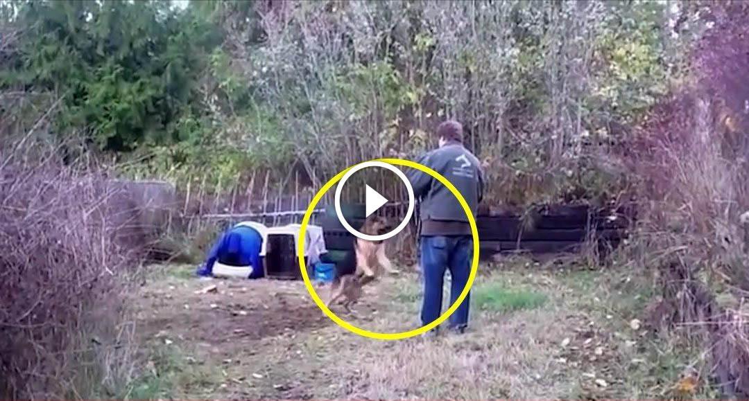 Что будет если освободить собаку просидевшую всю жизнь на цепи
