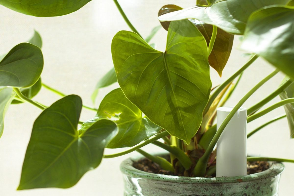 Гид по выбору Посадил и забыл: обзор умных гаджетов для растений