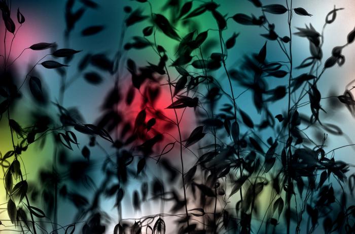 Игры с солнцем. Автор: Luis Mariano Gonzalez.