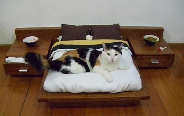 Кроватки для кошек сделать