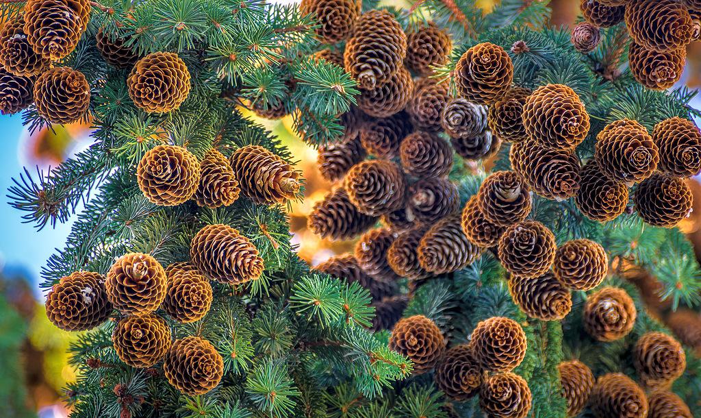 Природа — выдающийся художник, творения которого восхищают!
