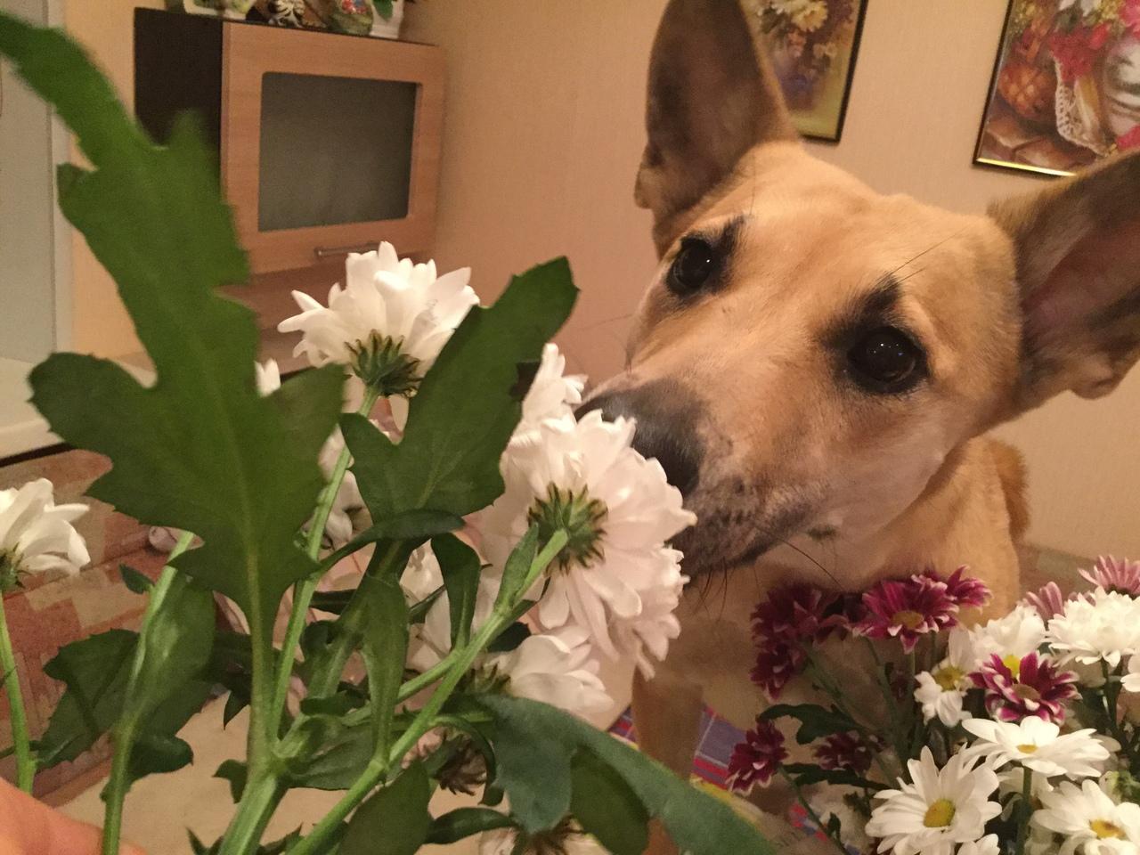 Тощая собака из приюта дрожала от холода… Но именно она уехала Домой!