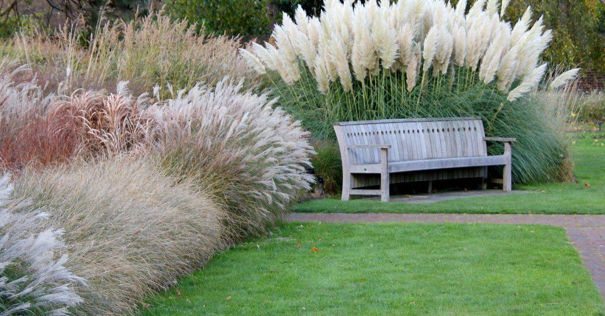 Декоративные травы, злаки и осоки в дизайне сада.