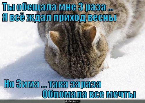 """""""ЛОЛКОТЫ"""". ФОТО КОТОВ С ПРИКОЛЬНЫМИ НАДПИСЯМИ-7."""