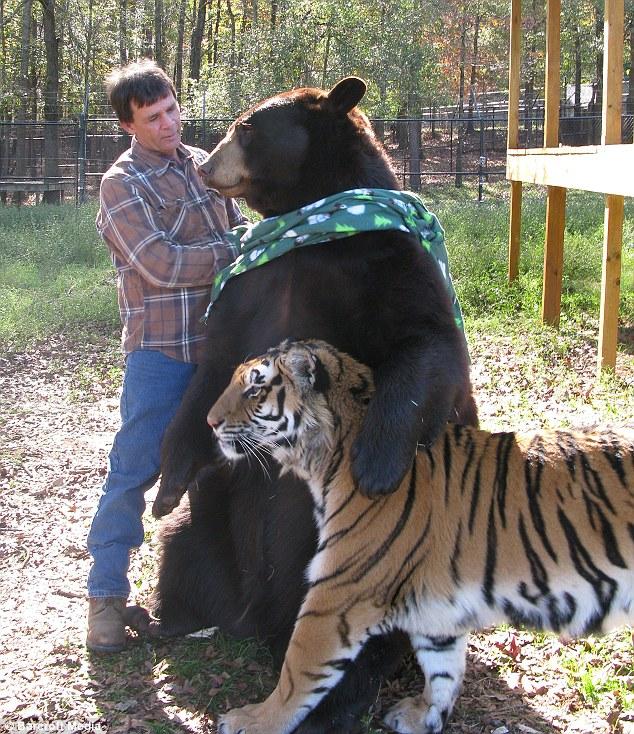 unbelievablefriendship 6 Невероятная дружба трех хищников