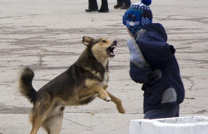 Как вести себя при нападении собаки