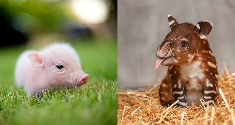 Самые милые детеныши животны…