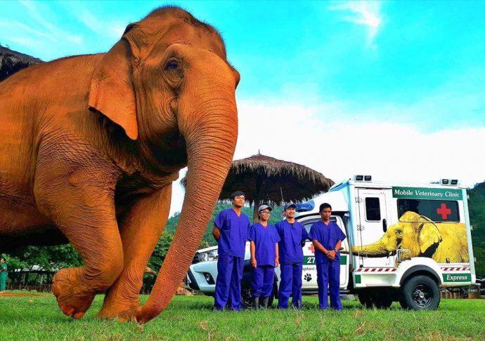 """""""Ведь так не бывает на свете, чтоб были потеряны дети…"""", – трубило целое стадо слонов, несясь навстречу крохе-слонёнку"""