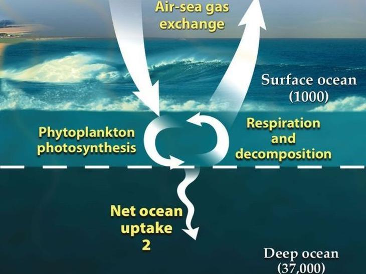 Странные факты, связанные с глубинами океана