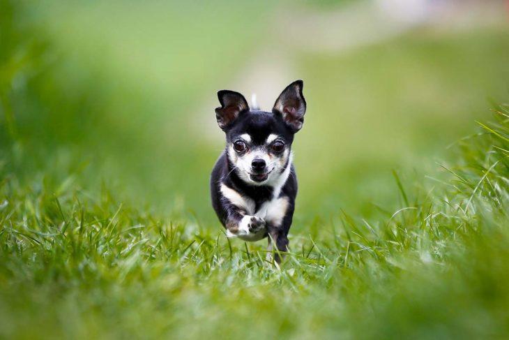 «Паша, держи собаку!»