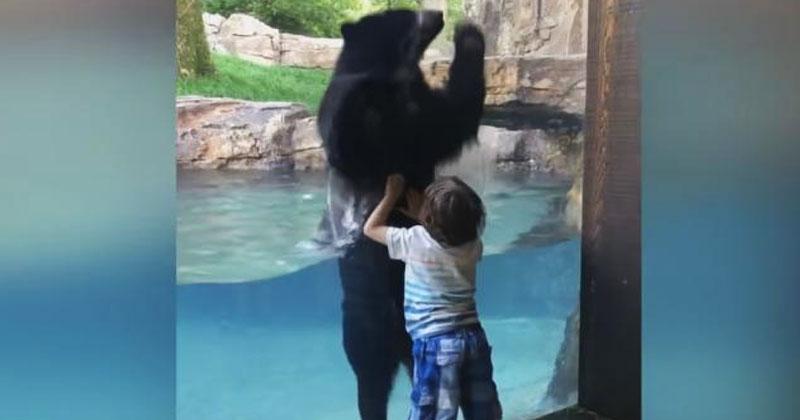 Мальчик и медведь в зоопарке соревновались, что выше прыгнет. Невероятно потешное видео!