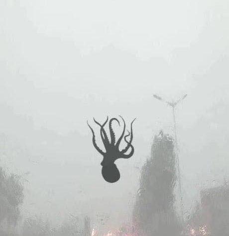 Тайфун «Эвиниар» обрушил на улицы китайского города разнообразных морских обитателей