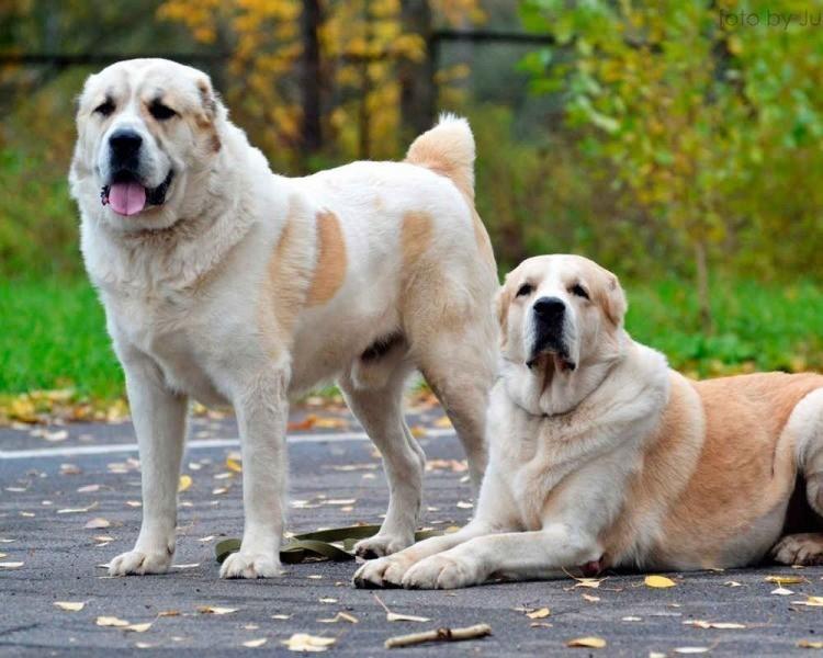 А у вашей собаки есть собака?