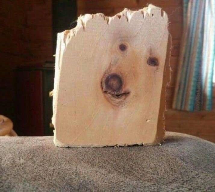 """Собаку """"заточили"""" в дереве животные, обман зрения, подборка, показалось, прикол, удачный кадр, фото, юмор"""